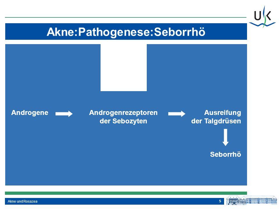 5 Akne:Pathogenese:Seborrhö Akne und Rosazea AndrogeneAndrogenrezeptorenAusreifung der Sebozytender Talgdrüsen Seborrhö