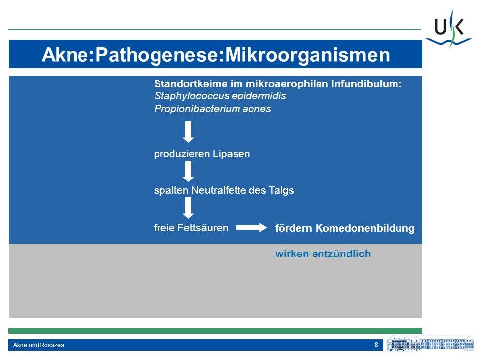 8 Akne:Pathogenese:Mikroorganismen Akne und Rosazea Standortkeime im mikroaerophilen Infundibulum: Staphylococcus epidermidis Propionibacterium acnes