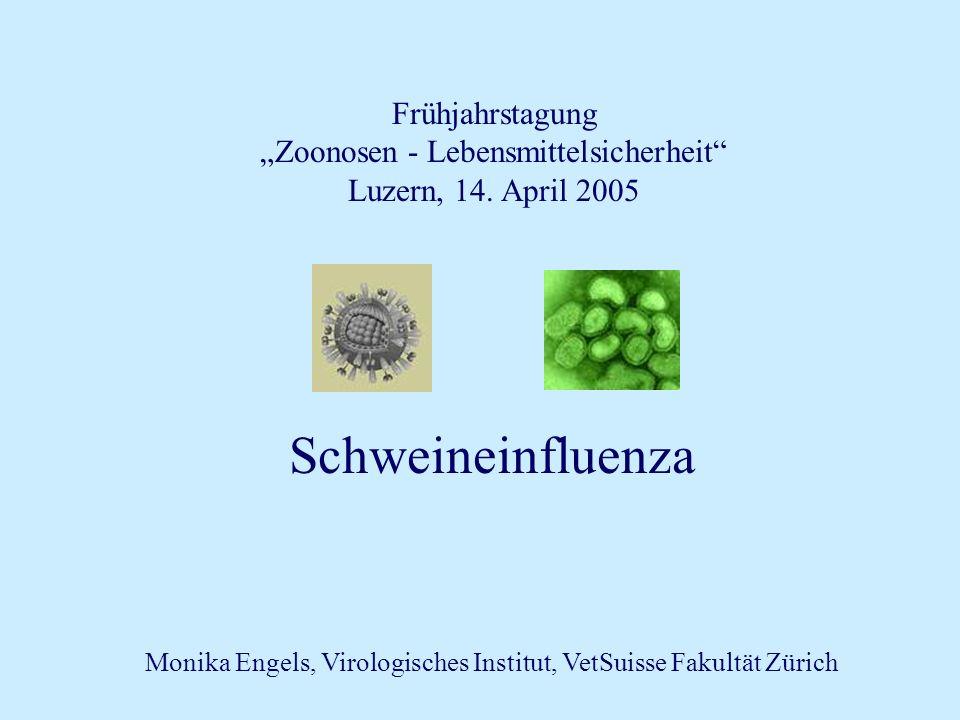 Frühjahrstagung Zoonosen - Lebensmittelsicherheit Luzern, 14. April 2005 Schweineinfluenza Monika Engels, Virologisches Institut, VetSuisse Fakultät Z