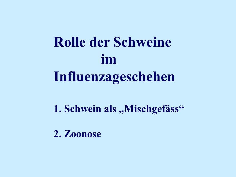 Rolle der Schweine im Influenzageschehen 1. Schwein als Mischgefäss 2. Zoonose