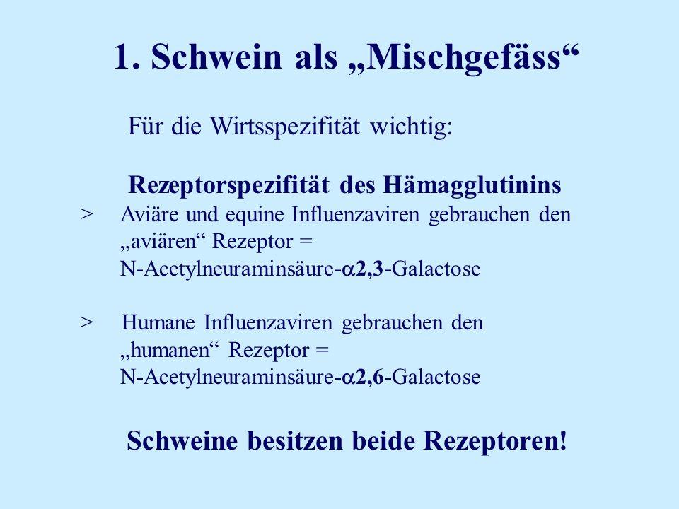 1. Schwein als Mischgefäss Für die Wirtsspezifität wichtig: Rezeptorspezifität des Hämagglutinins > Aviäre und equine Influenzaviren gebrauchen den av