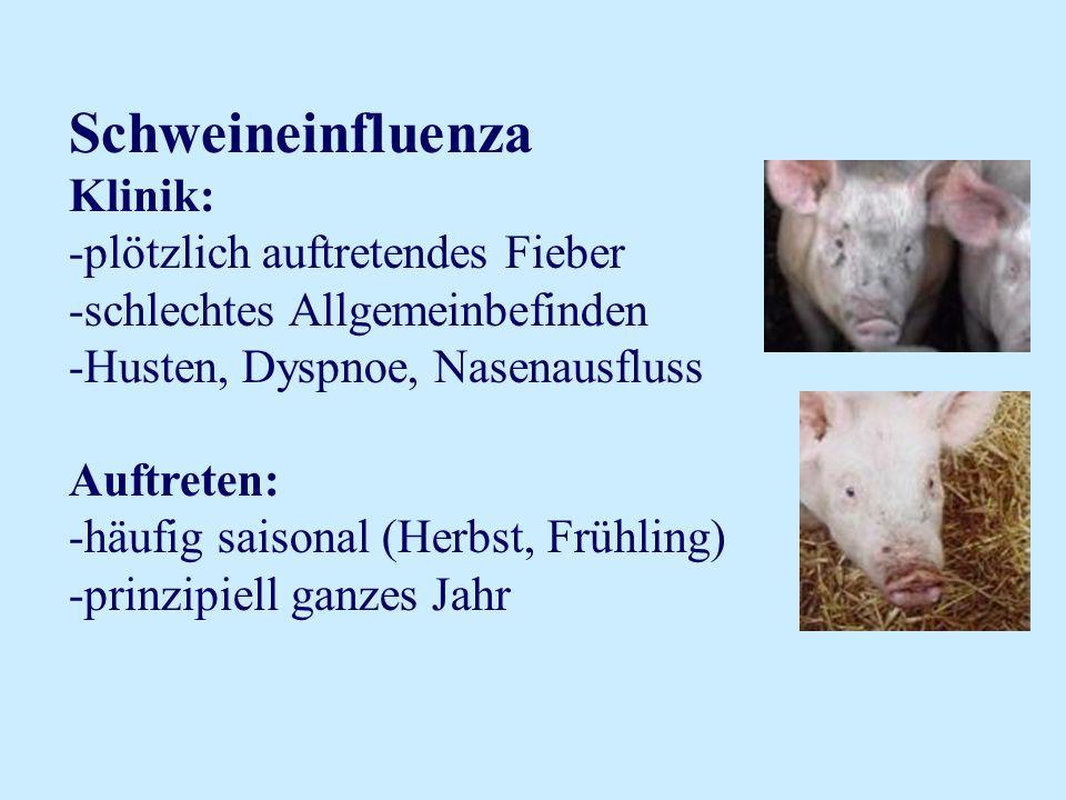 Schweineinfluenza Klinik: -plötzlich auftretendes Fieber -schlechtes Allgemeinbefinden -Husten, Dyspnoe, Nasenausfluss Auftreten: -häufig saisonal (He