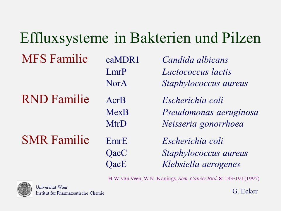 G. Ecker Universität Wien Institut für Pharmazeutische Chemie Effluxsysteme in Bakterien und Pilzen MFS Familie caMDR1Candida albicans LmrPLactococcus