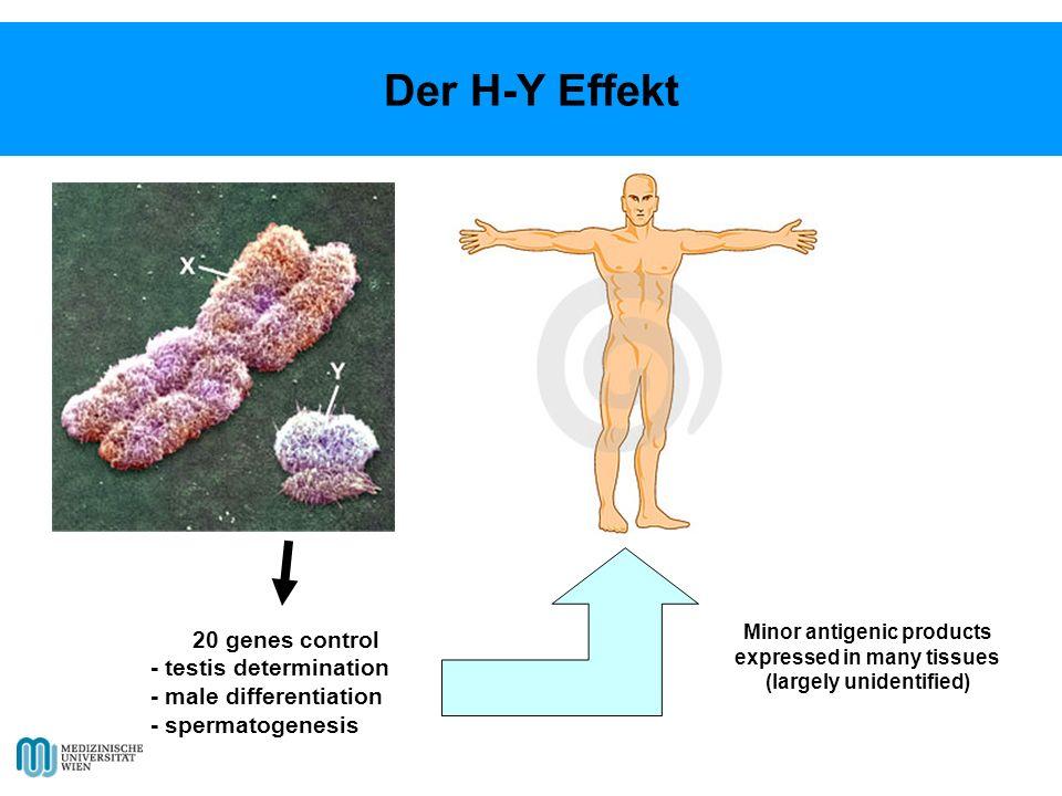 20 genes control - testis determination - male differentiation - spermatogenesis Minor antigenic products expressed in many tissues (largely unidentified) Der H-Y Effekt