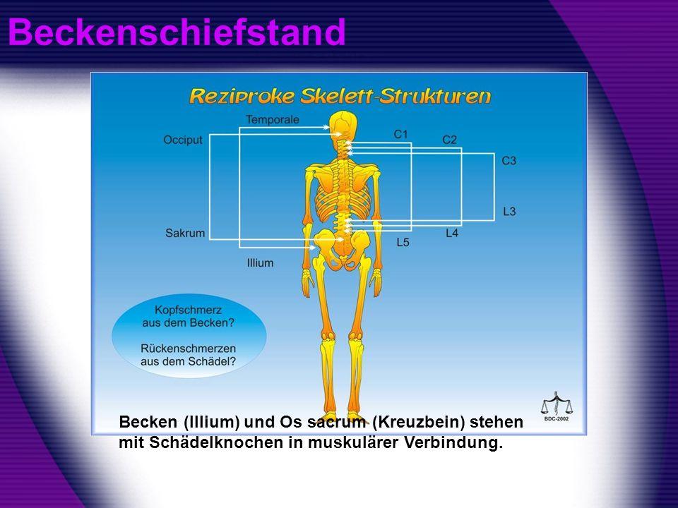 Beckenschiefstand Becken (Illium) und Os sacrum (Kreuzbein) stehen mit Schädelknochen in muskulärer Verbindung.