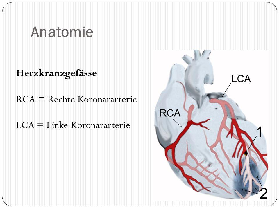Anatomie Herzkranzgefässe RCA = Rechte Koronararterie LCA = Linke Koronararterie