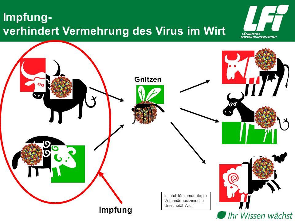 Gnitzen Impfung- verhindert Vermehrung des Virus im Wirt Impfung Institut für Immunologie Veterinärmedizinische Universität Wien