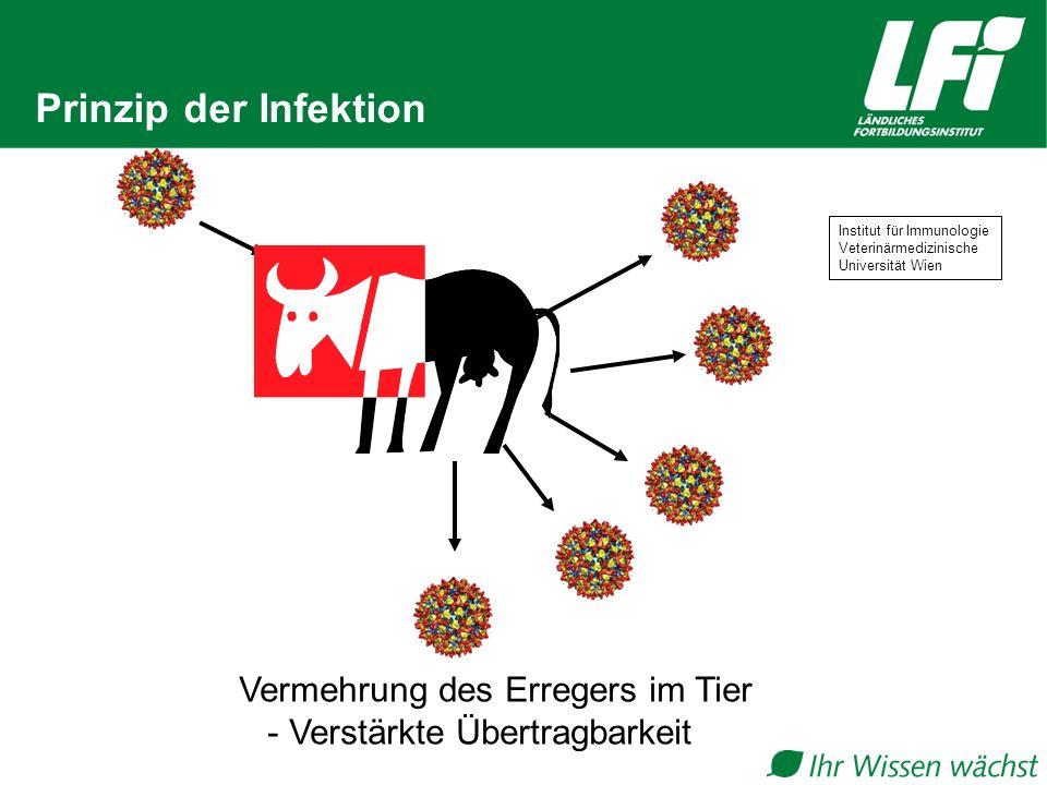 Prinzip der Infektion Vermehrung des Erregers im Tier - Verstärkte Übertragbarkeit Institut für Immunologie Veterinärmedizinische Universität Wien