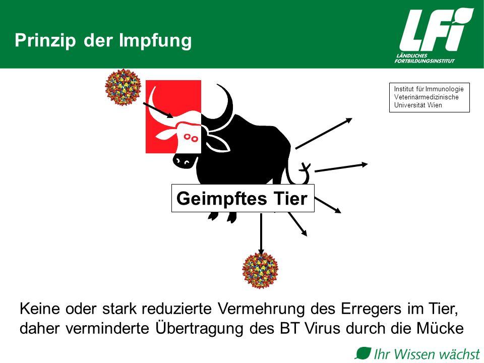 Prinzip der Impfung Keine oder stark reduzierte Vermehrung des Erregers im Tier, daher verminderte Übertragung des BT Virus durch die Mücke Geimpftes