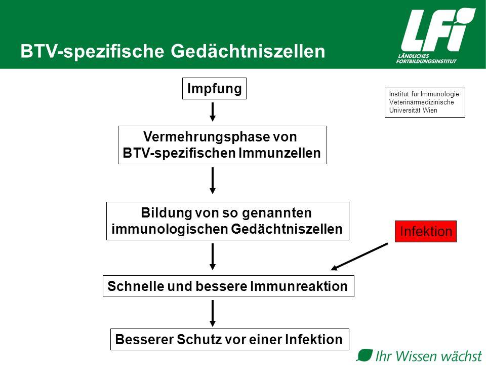 BTV-spezifische Gedächtniszellen Impfung Vermehrungsphase von BTV-spezifischen Immunzellen Infektion Schnelle und bessere Immunreaktion Bildung von so