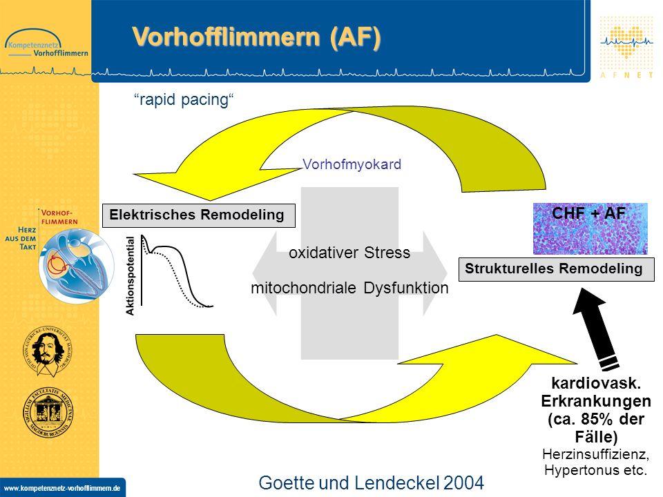 www.kompetenznetz-vorhofflimmern.de Elektrisches Remodeling Strukturelles Remodeling oxidativer Stress mitochondriale Dysfunktion rapid pacing kardiovask.