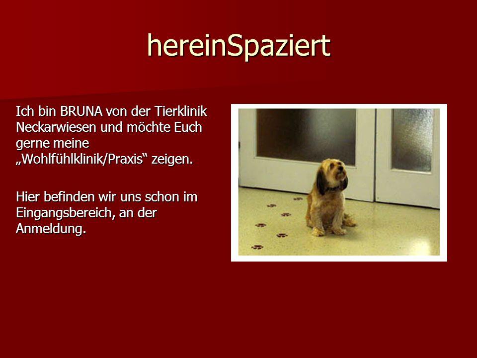 hereinSpaziert Ich bin BRUNA von der Tierklinik Neckarwiesen und möchte Euch gerne meine Wohlfühlklinik/Praxis zeigen. Hier befinden wir uns schon im