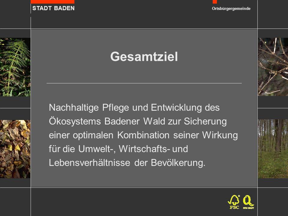 STADT BADEN Ortsbürgergemeinde Holzproduktion Sturmereignis Lothar vom 26.12.1999 als Chance für den Aufbau naturnäherer Waldbestände