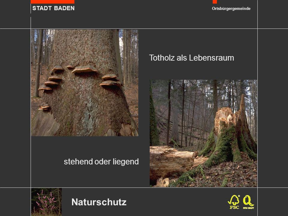 STADT BADEN Ortsbürgergemeinde Naturschutz stehend oder liegend Totholz als Lebensraum