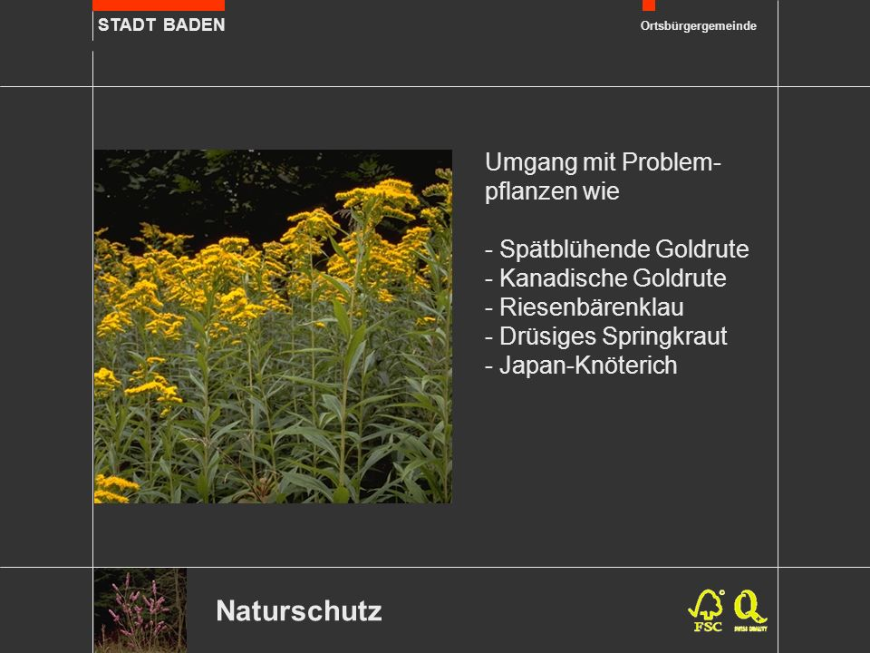 STADT BADEN Ortsbürgergemeinde Erholung Praktische Erfahrungen für die Jugend im Rahmen des Projektes Schulzimmer Natur.