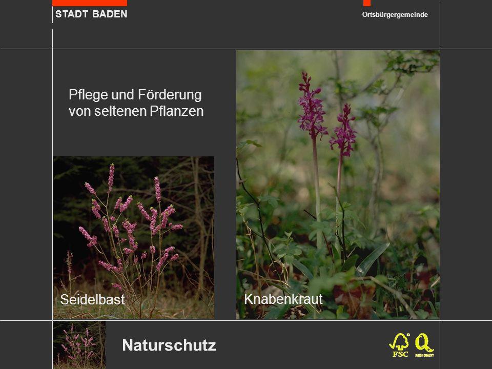 STADT BADEN Ortsbürgergemeinde Naturschutz Pflege und Förderung von seltenen Pflanzen Seidelbast Knabenkraut