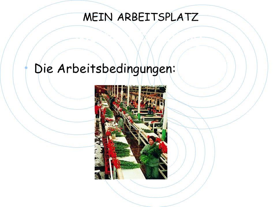 Meine Abteilung Die Arbeitsbedingungen: MEIN ARBEITSPLATZ