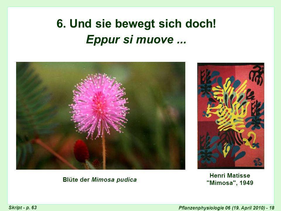 Pflanzenphysiologie 06 (19.April 2010) - 18 6. Und sie bewegt sich doch.