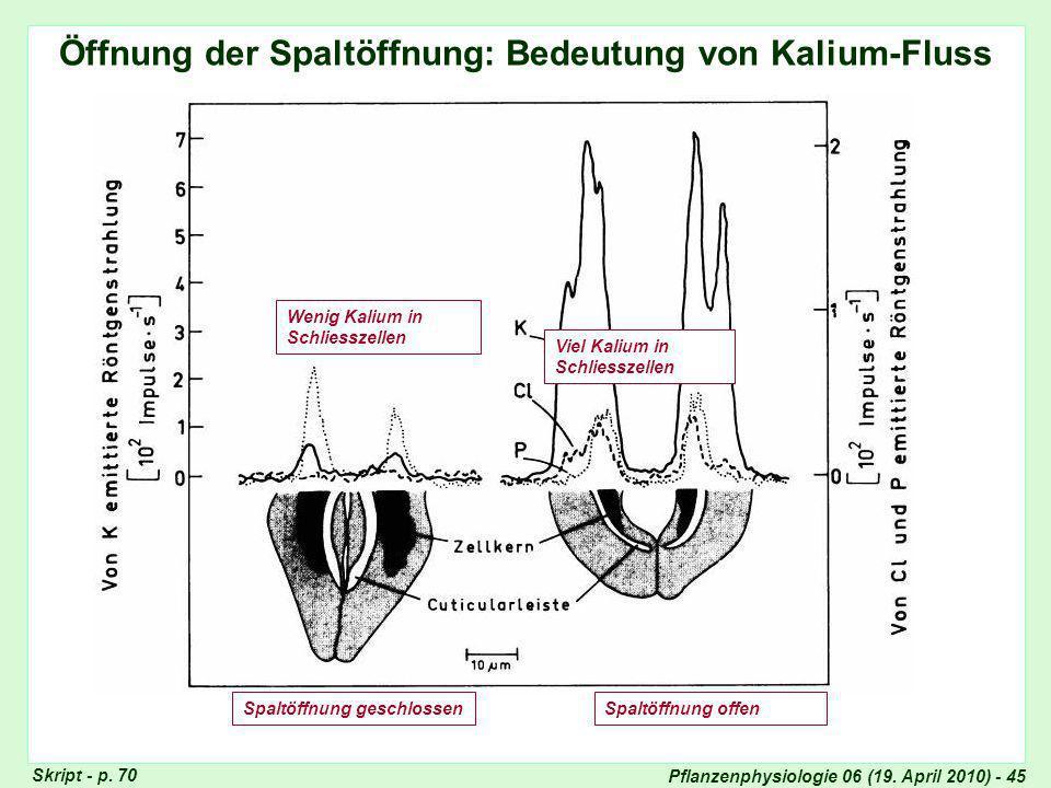Pflanzenphysiologie 06 (19.