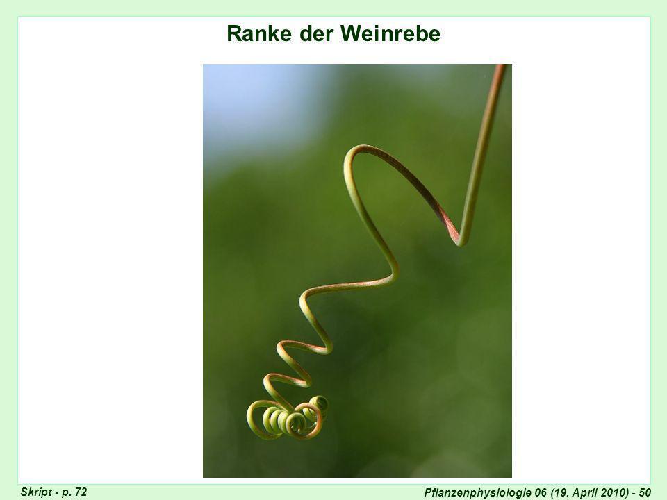 Pflanzenphysiologie 06 (19. April 2010) - 50 Ranke Vitis Ranke der Weinrebe Skript - p. 72