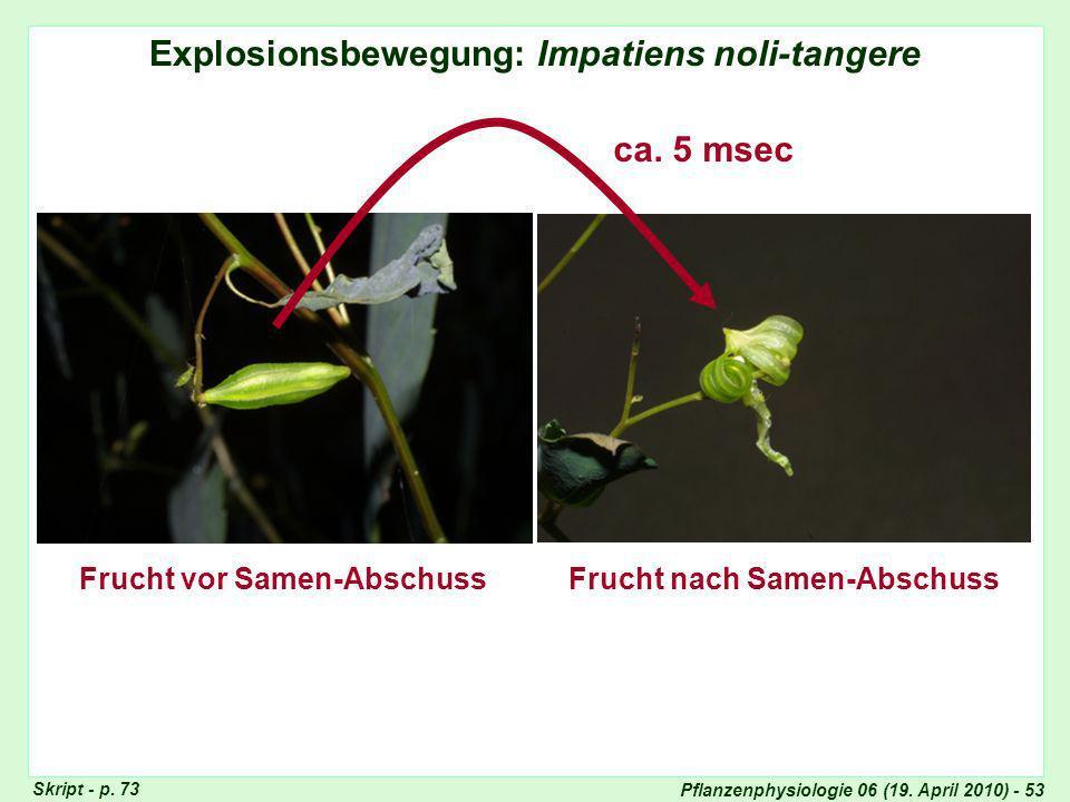 Pflanzenphysiologie 06 (19.April 2010) - 53 Impatiens Skript - p.