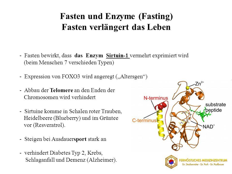 Fasten und Enzyme (Fasting) Fasten verlängert das Leben - Fasten bewirkt, dass das Enzym Sirtuin-1 vermehrt exprimiert wird (beim Menschen 7 verschieden Typen) - Expression von FOXO3 wird angeregt (Altersgen) - Abbau der Telomere an den Enden der Chromosomen wird verhindert - Sirtuine komme in Schalen roter Trauben, Heidelbeere (Blueberry) und im Grüntee vor (Resveratrol).