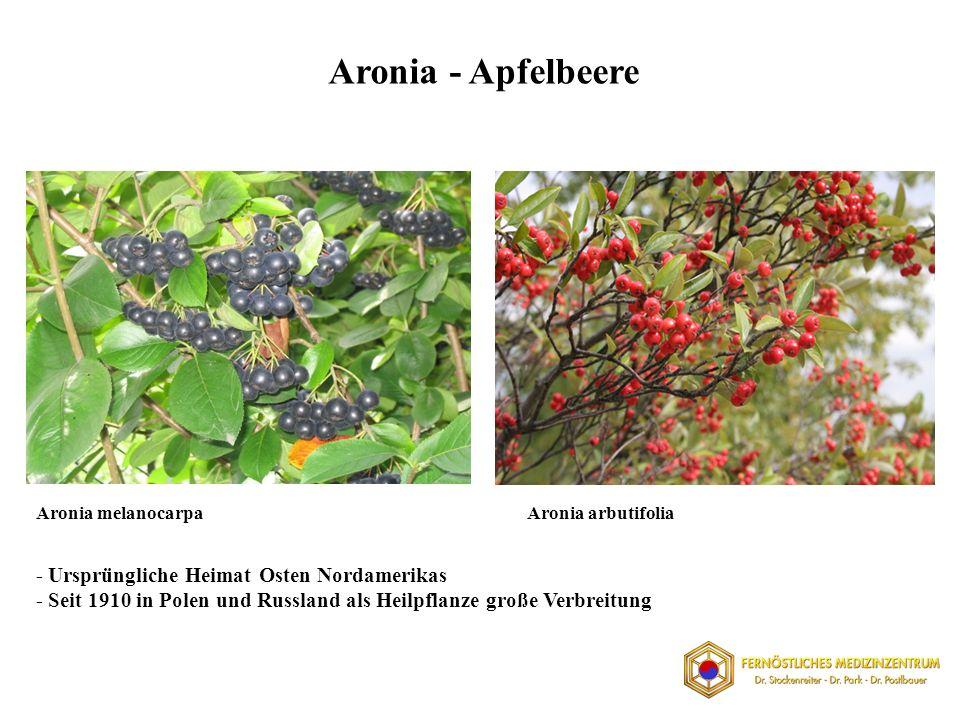 Aronia - Apfelbeere Aronia melanocarpaAronia arbutifolia - Ursprüngliche Heimat Osten Nordamerikas - Seit 1910 in Polen und Russland als Heilpflanze große Verbreitung