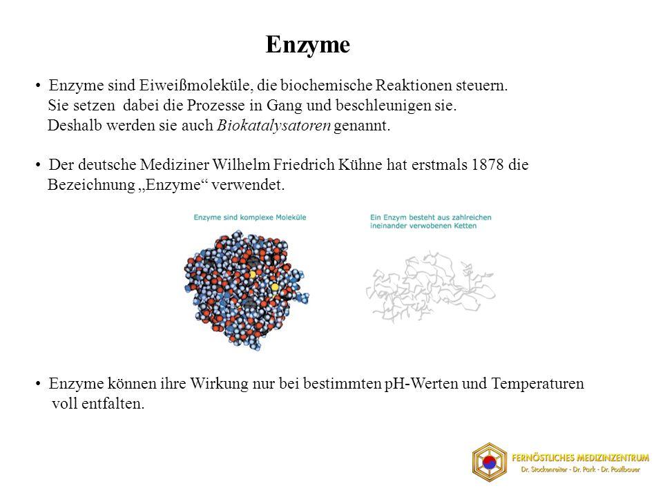Enzyme sind Eiweißmoleküle, die biochemische Reaktionen steuern.