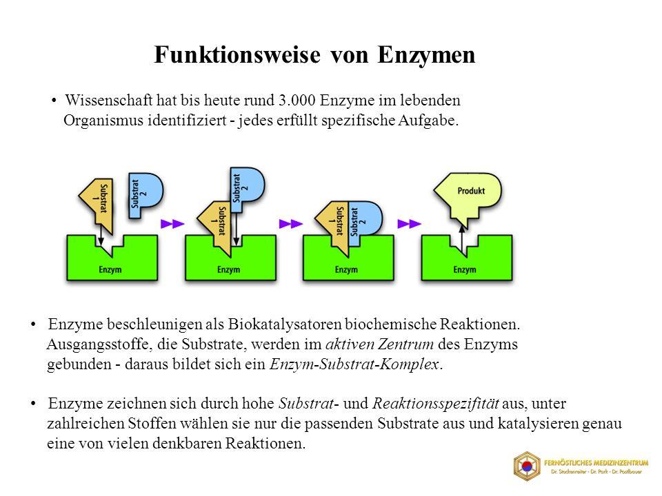 Funktionsweise von Enzymen Wissenschaft hat bis heute rund 3.000 Enzyme im lebenden Organismus identifiziert - jedes erfüllt spezifische Aufgabe.