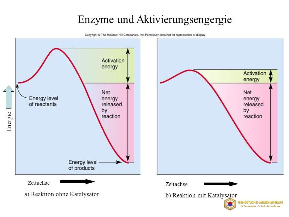 Enzyme und Aktivierungsengergie Zeitachse a) Reaktion ohne Katalysator Zeitachse b) Reaktion mit Katalysator Energie