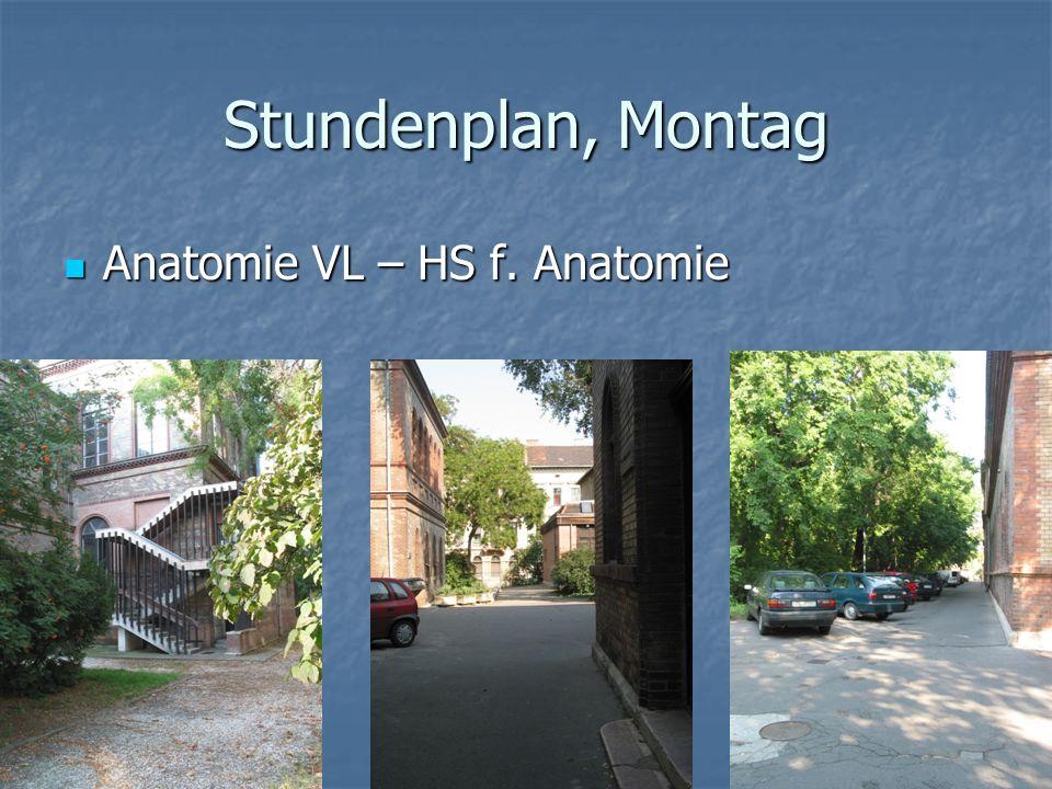 Stundenplan, Montag Anatomie VL – HS f. Anatomie Anatomie VL – HS f. Anatomie