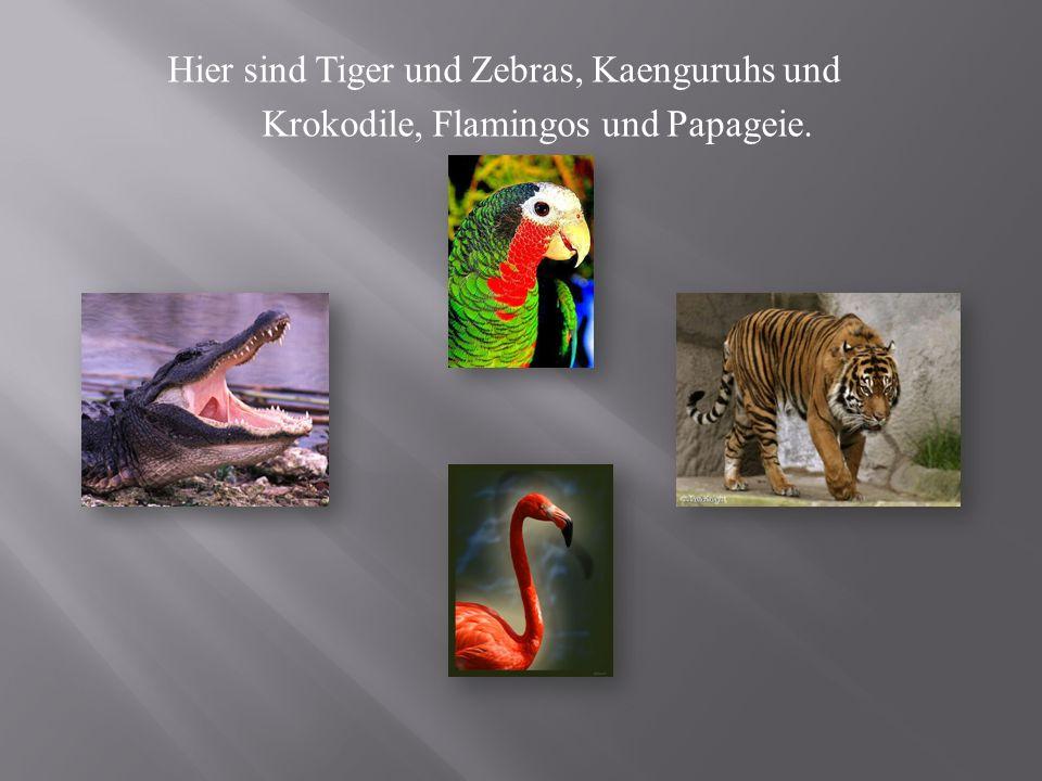 Hier sind Tiger und Zebras, Kaenguruhs und Krokodile, Flamingos und Papageie.