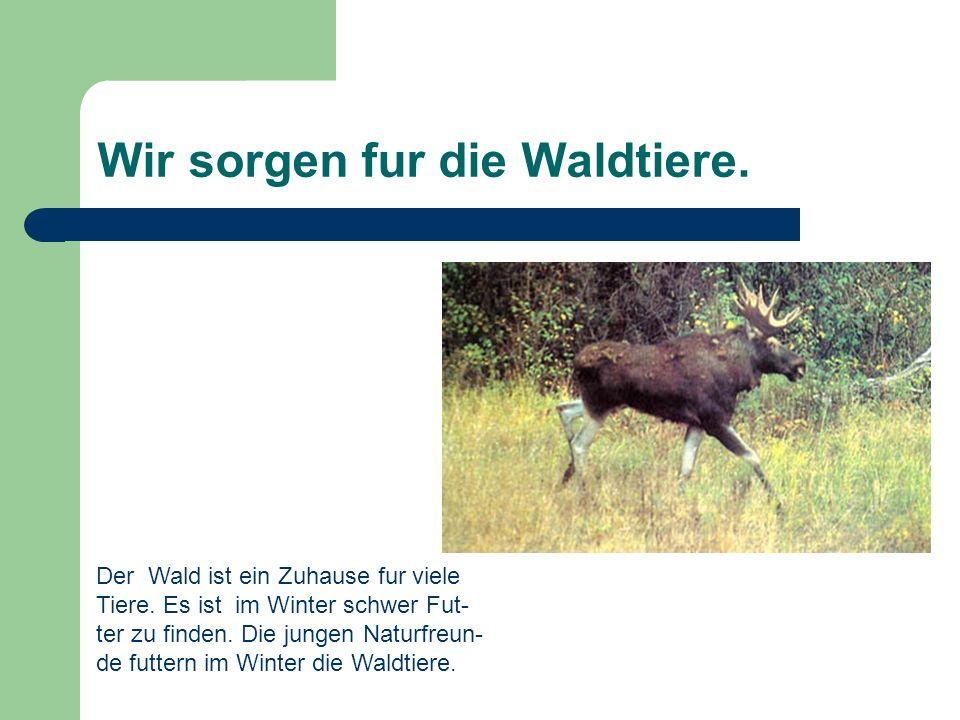 Wir sorgen fur die Waldtiere. Der Wald ist ein Zuhause fur viele Tiere. Es ist im Winter schwer Fut- ter zu finden. Die jungen Naturfreun- de futtern