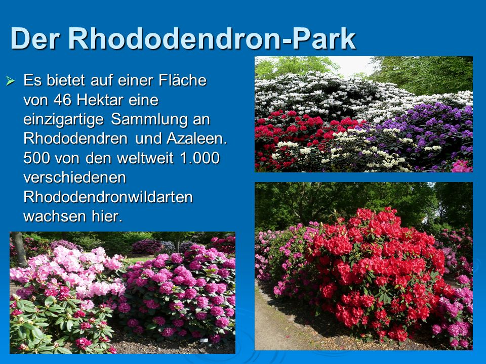 Der Rhododendron-Park Es bietet auf einer Fläche von 46 Hektar eine einzigartige Sammlung an Rhododendren und Azaleen. 500 von den weltweit 1.000 vers