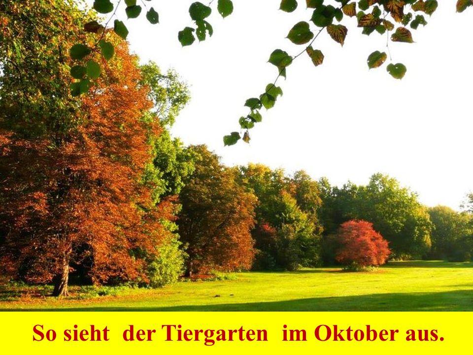 So sieht der Tiergarten im Oktober aus.