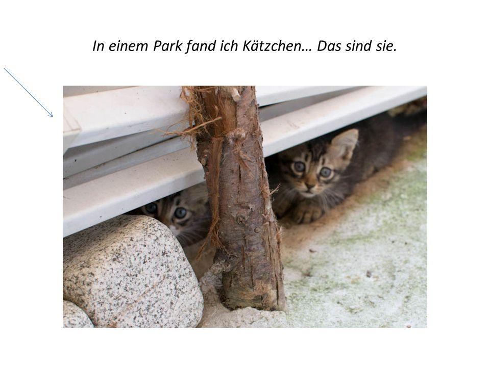 In einem Park fand ich Kätzchen… Das sind sie.