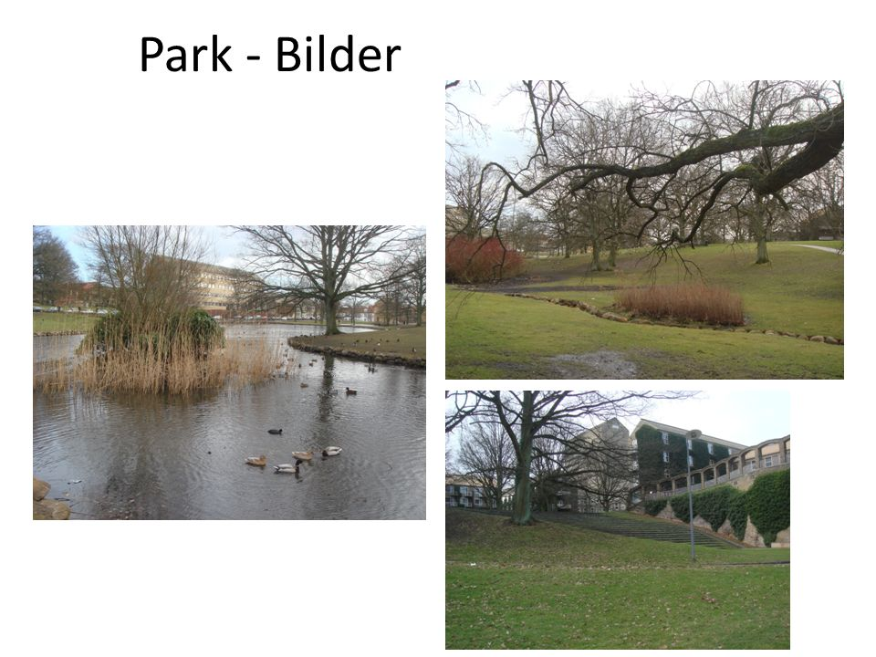 Park - Bilder