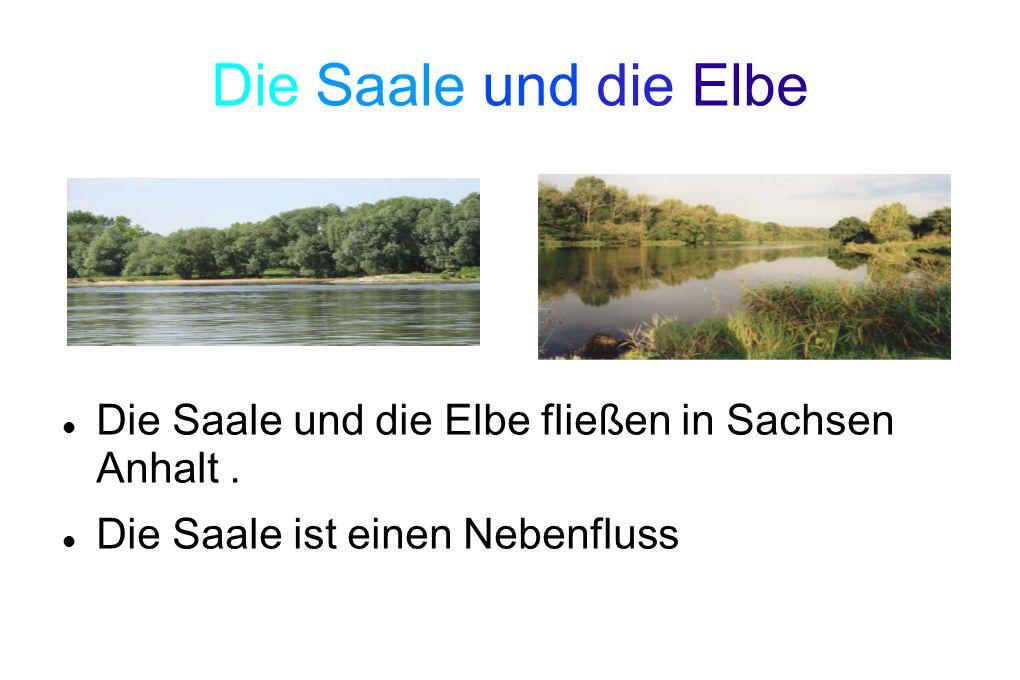 Die Saale und die Elbe Die Saale und die Elbe fließen in Sachsen Anhalt. Die Saale ist einen Nebenfluss