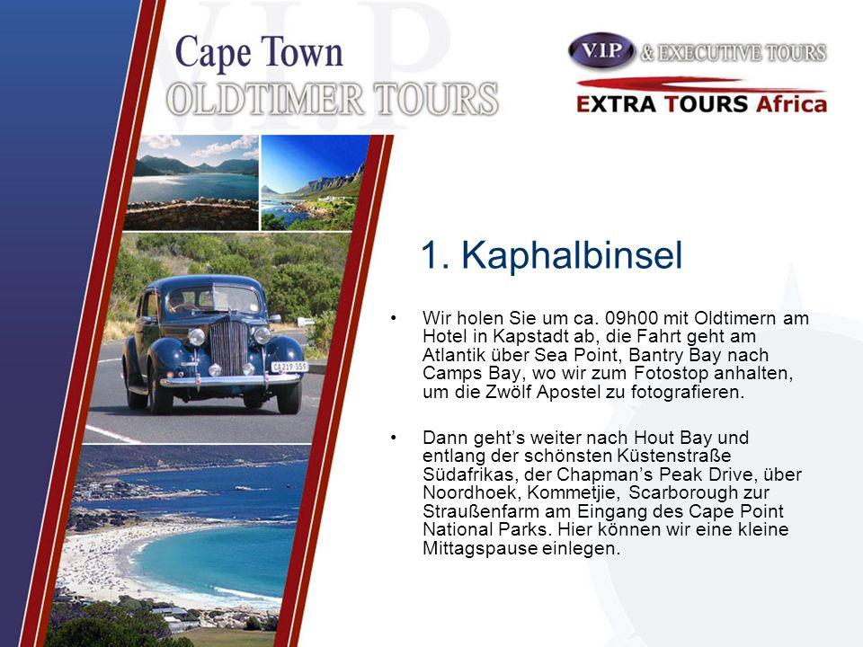 1. Kaphalbinsel Wir holen Sie um ca. 09h00 mit Oldtimern am Hotel in Kapstadt ab, die Fahrt geht am Atlantik über Sea Point, Bantry Bay nach Camps Bay