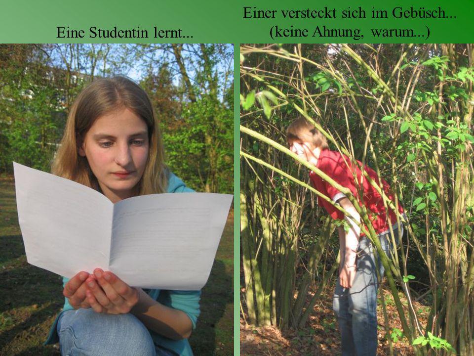 Einer versteckt sich im Gebüsch... (keine Ahnung, warum...) Eine Studentin lernt...