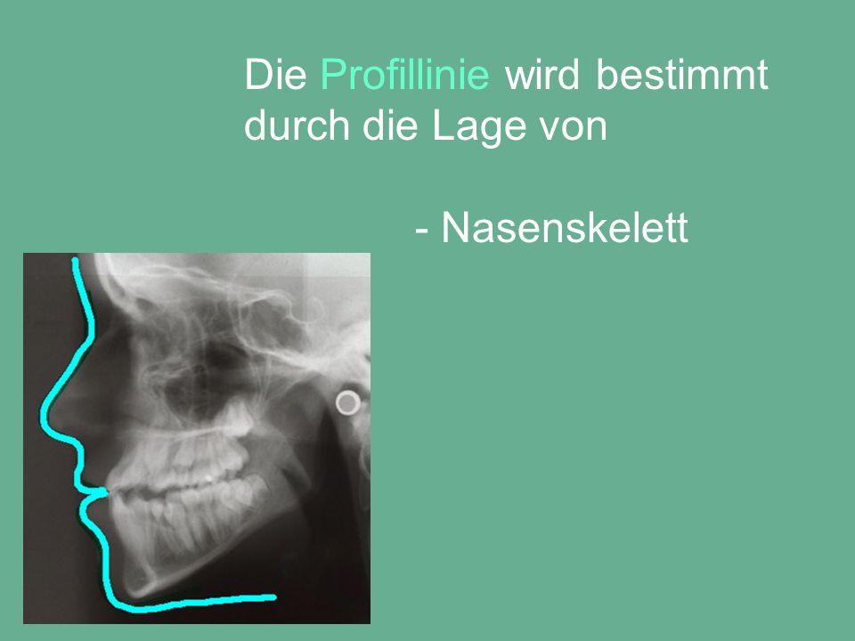 Die Profillinie wird bestimmt durch die Lage von - Nasenskelett