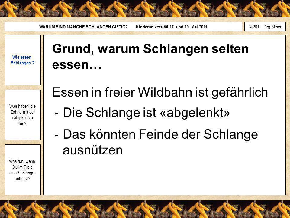 © 2011 Jürg Meier WARUM SIND MANCHE SCHLANGEN GIFTIG.
