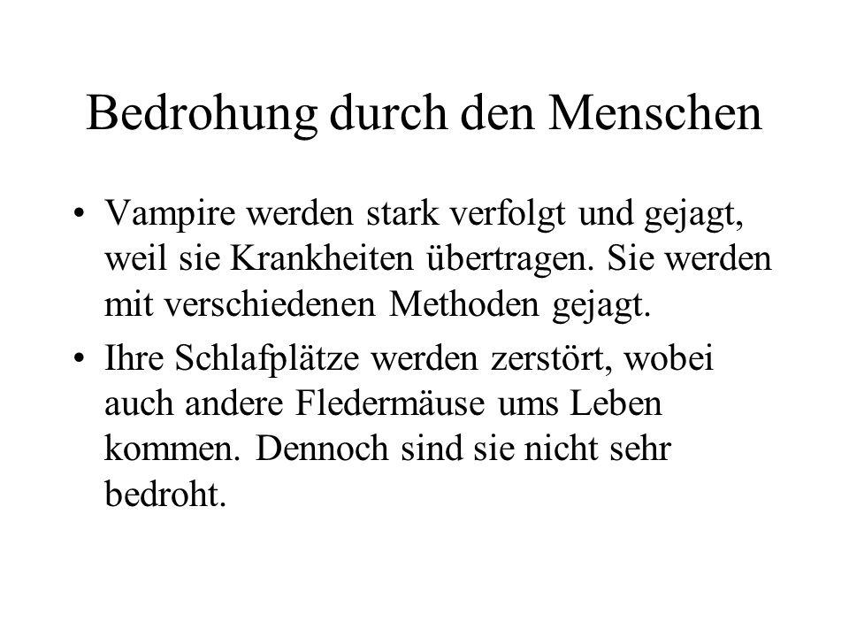 Schäden durch Vampirbisse Der Gemeine Vampir überträgt von den Vampirfledermäusen am meisten Krankheiten. Dadurch sterben ca. 100.000 Rinder im Jahr.