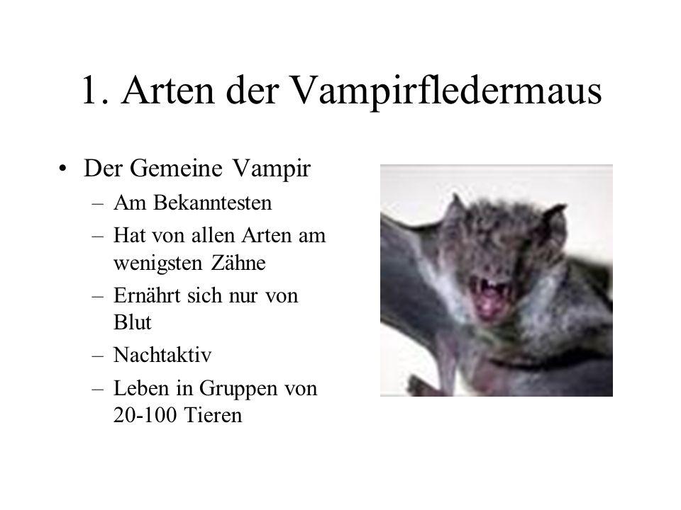 Die Vampirfledermaus Ein Vortrag von Seorim