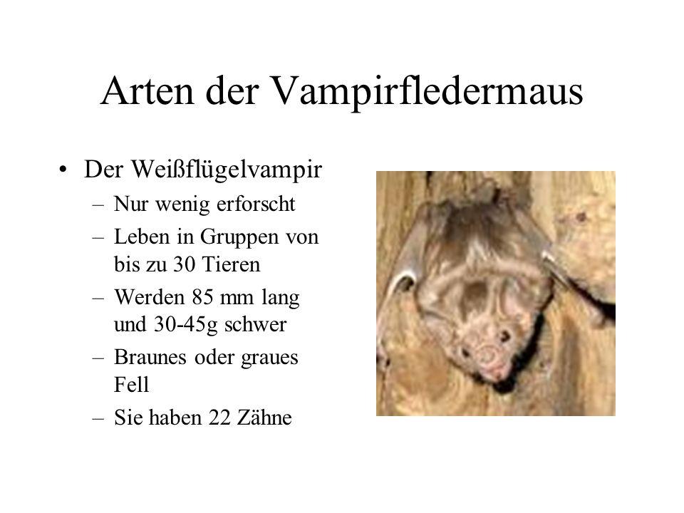 1. Arten der Vampirfledermaus Der Gemeine Vampir –A–Am Bekanntesten –H–Hat von allen Arten am wenigsten Zähne –E–Ernährt sich nur von Blut –N–Nachtakt