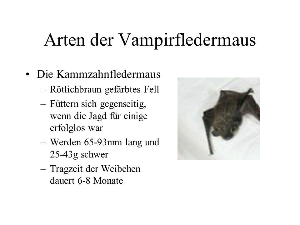 Arten der Vampirfledermaus Der Weißflügelvampir –Nur wenig erforscht –Leben in Gruppen von bis zu 30 Tieren –Werden 85 mm lang und 30-45g schwer –Brau