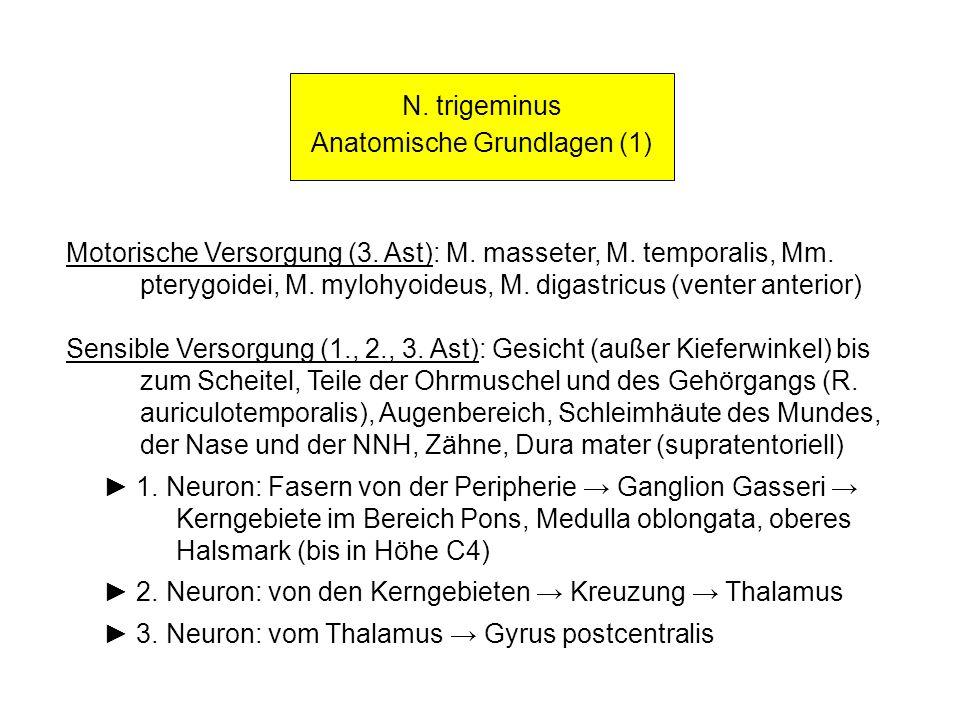 N. trigeminus Anatomische Grundlagen (1) Motorische Versorgung (3. Ast): M. masseter, M. temporalis, Mm. pterygoidei, M. mylohyoideus, M. digastricus