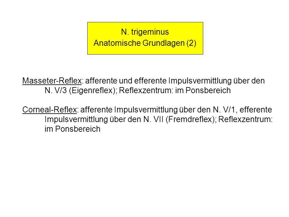 N. trigeminus Anatomische Grundlagen (2) Masseter-Reflex: afferente und efferente Impulsvermittlung über den N. V/3 (Eigenreflex); Reflexzentrum: im P
