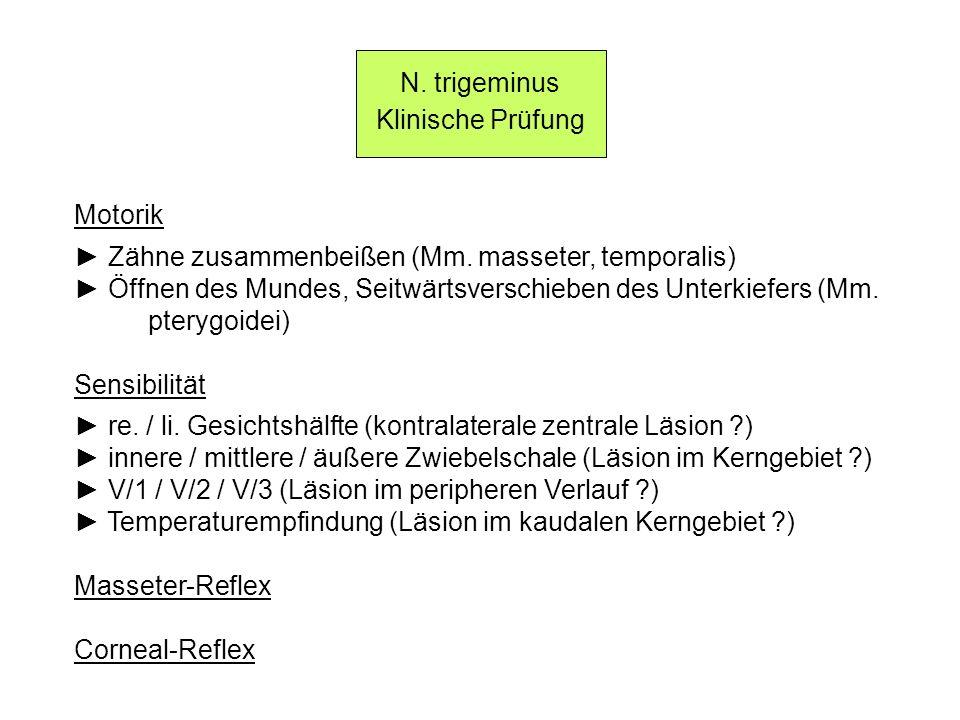N. trigeminus Klinische Prüfung Motorik Zähne zusammenbeißen (Mm. masseter, temporalis) Öffnen des Mundes, Seitwärtsverschieben des Unterkiefers (Mm.