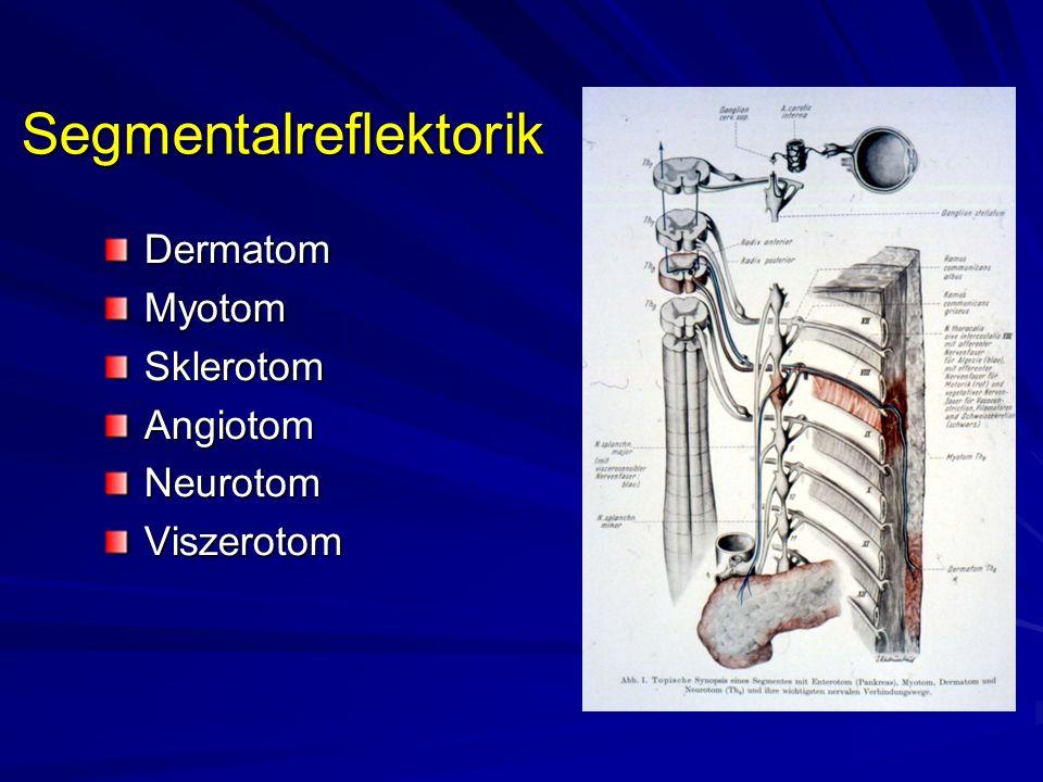 Segmentalreflektorik DermatomMyotomSklerotomAngiotomNeurotomViszerotom